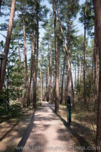 白州蒸留所の木々